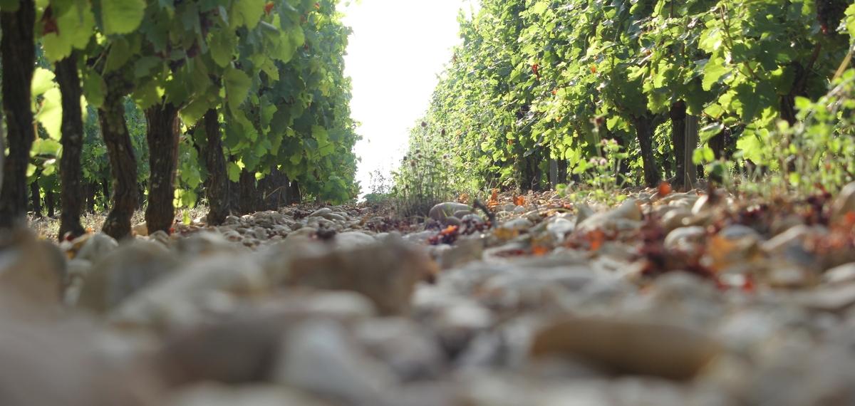 Terroir viticole de Graves