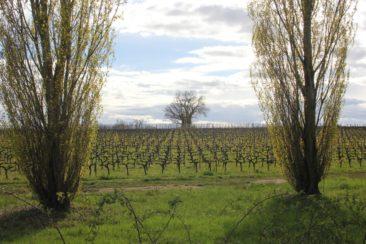 Arbres, vignes, verdure