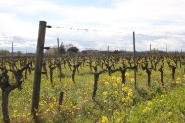 Symphonie viticole au Domaine Rotier