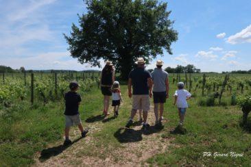 En famille sur les chemins de la vi(gn)e